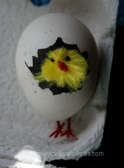 egg with feet and fluffy chicken hatching
