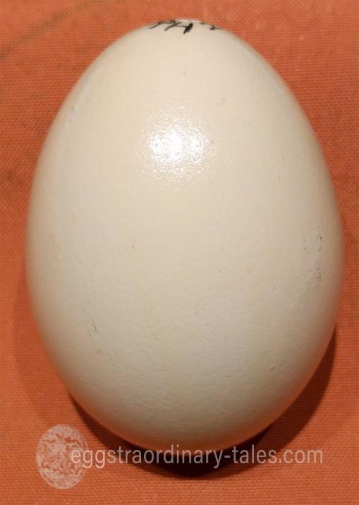 Charlotte's blank egg